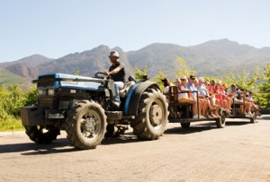 Grande Provence Harvest Day Tractor Ride LR