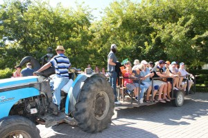 Tractor ride at Grande Provence Harvest Festival 2