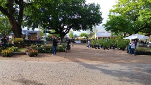 TOKARA Open Garden and Rare Plant Sale
